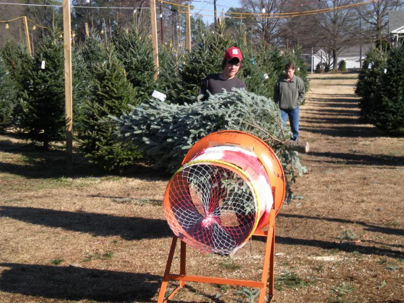 Phillips Farms of Chatham - Christmas Trees